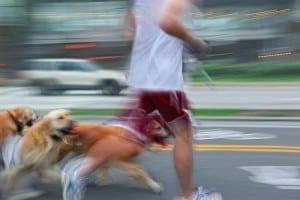 letsel door dieren, hondenbeet