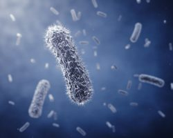 salmonellabacterie