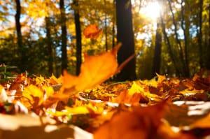 letselschade en herfst
